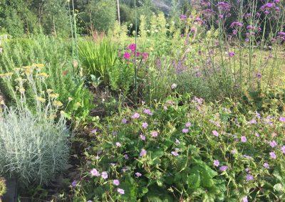 borderplants.4