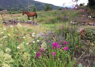 borderplants.paard