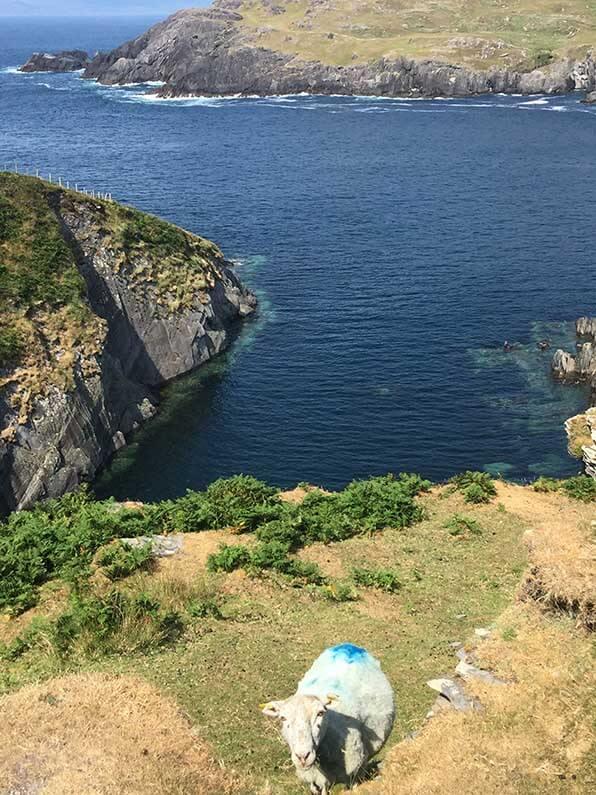Schapen klauteren moeiteloos op het ruige 225 km hoge eiland